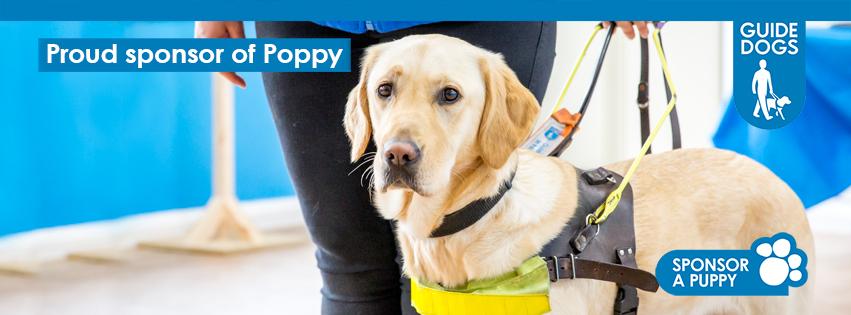 Poppy Pupdate